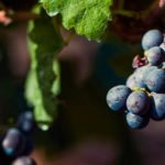 listan-negro-vino-canarias