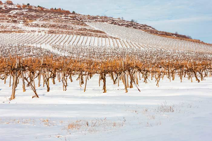 crisis-historica-del-vino-tokaj