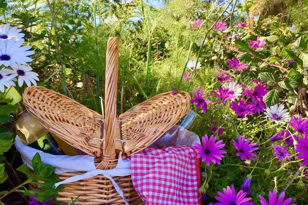 picnics en tenerife enoturismo canarias