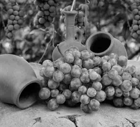 el vino y sus crisis a través de la historia