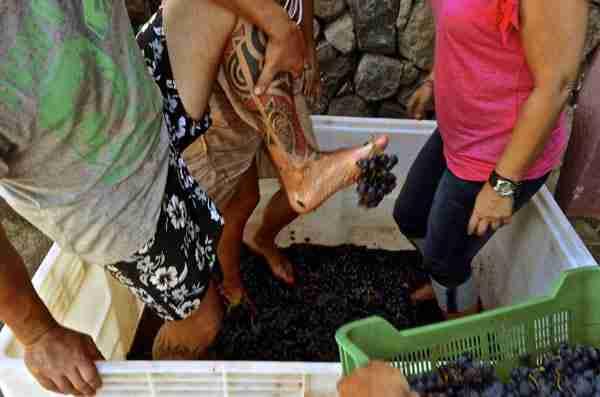 turismo entre viñedos para grupos