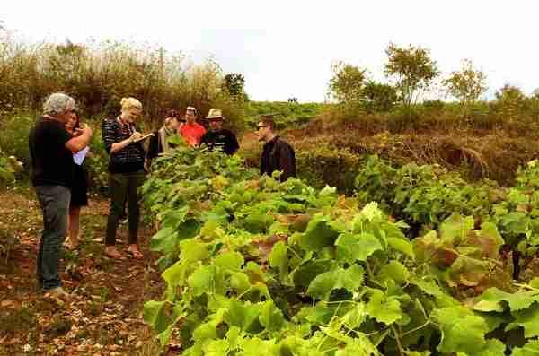 turismo entre viñedos guiado por enólogo